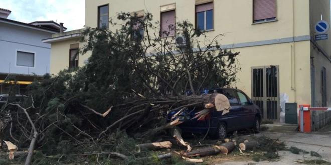 PIEDIMONTE MATESE – Vento forte, danni in tutta la città. Albero schiaccia una vettura. Molte aziende senza corrente. Ecco le immagini