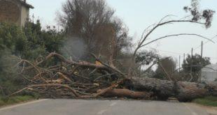 Alvignano – Albero cade sulla strada, automobilista miracolato