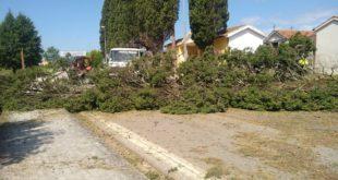 Riardo – Cimitero, abbattuti 30 antichi cipressi. Il comune pagherà quasi 11mila euro. Alcuni dubbi: la legna che fine farà?