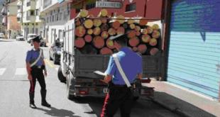 VAIRANO PATENORA – Taglialegna abusivi, denunciato imprenditore e suo dipendente