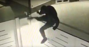 Pietramelara – Furti, tornano a casa e trovano i ladri: quattro malviventi in fuga
