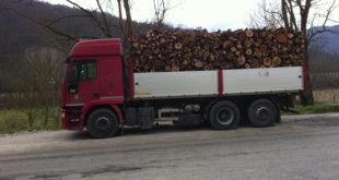 FROSINONE / ROCCAMONFINA – Commerciante di legname truffato dalla famiglia Spada: in due sotto processo