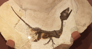 pietraroja-ciro