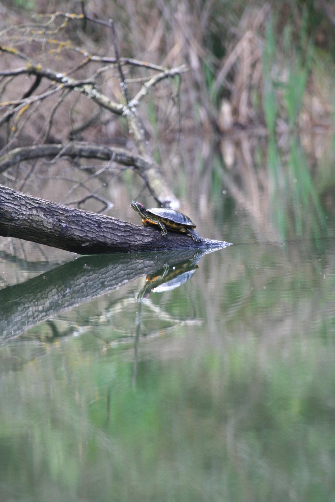 Marzano appio il lago delle corree infestato da for Lago per tartarughe
